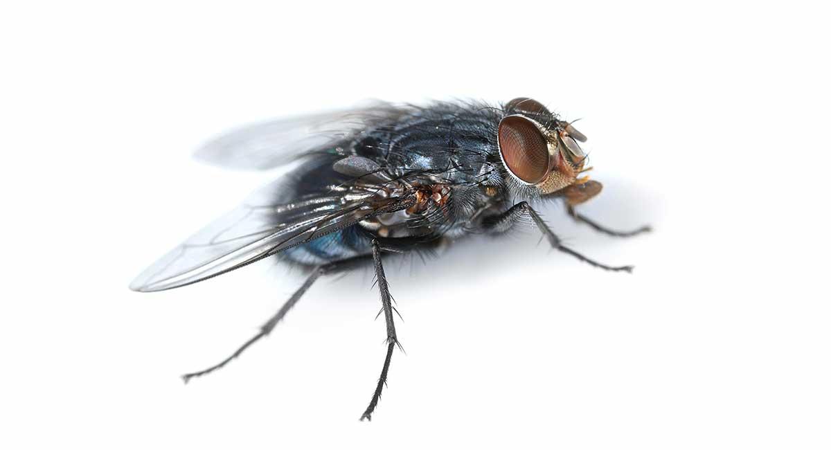 flies in attic how to get rid of uk