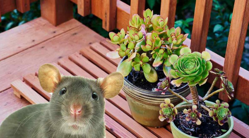 how to get rid of rats in garden